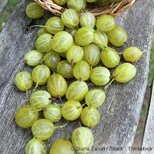 Gooseberries Healthy Recipes