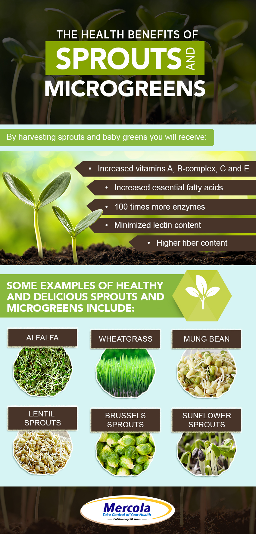 The Health Benefits of Sprouts and Microgreens