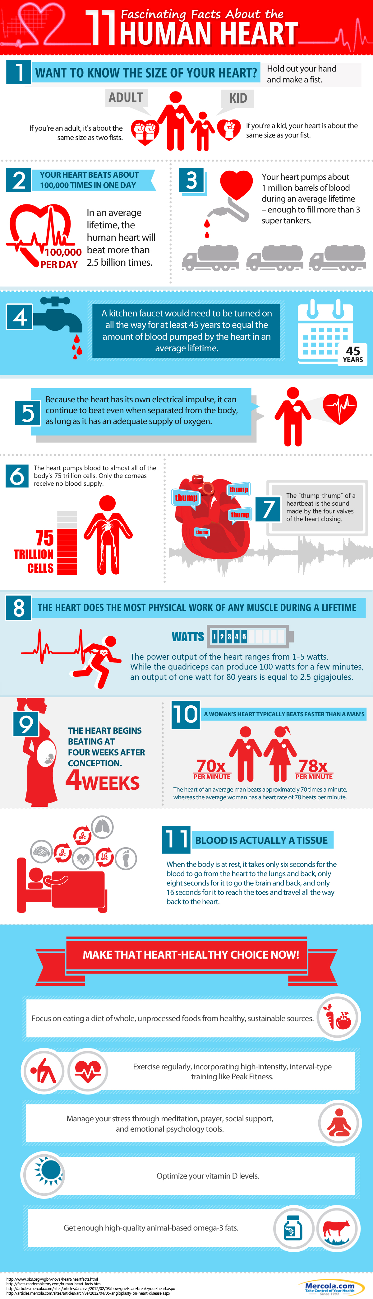 11 Fascinating Facts About The Human Heart Infographic