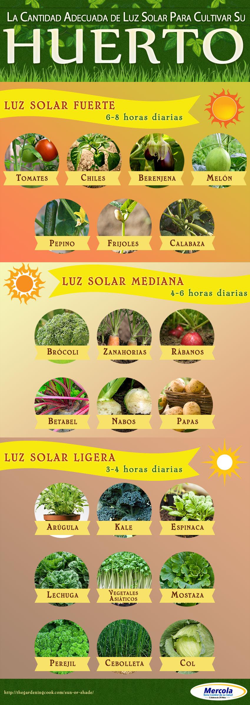 Infografia Cultivar Huerto
