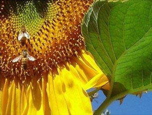Proper Pollination
