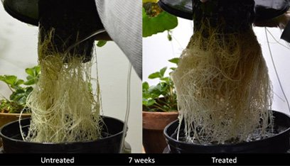 Treated Plant Roots