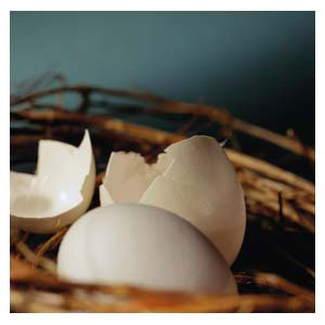 Eggshell Membrane is good Collagen Source