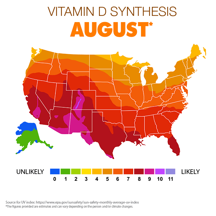 Vitamin D Synthesis - August