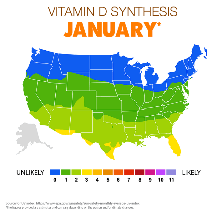 Vitamin D Synthesis - January