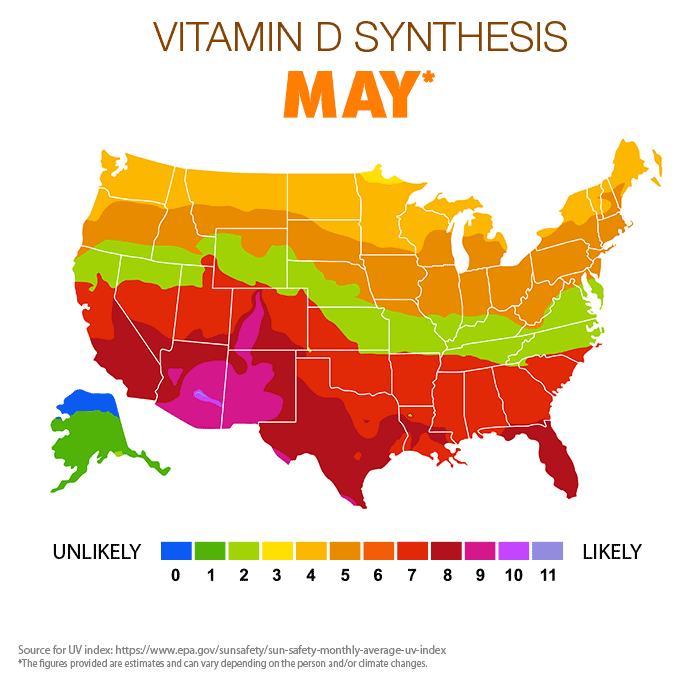 Vitamin D Synthesis - May
