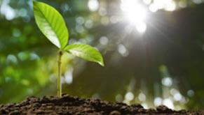 Cómo cultivar vegetales