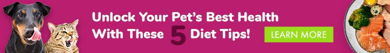Cliquez ici pour accéder aux 5 conseils alimentaires incontournables du Dr Becker pour votre animal de compagnie.