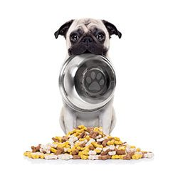 pet's commercial diet