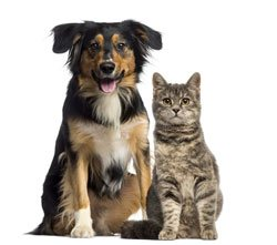 Curcumin for Dogs and Cats