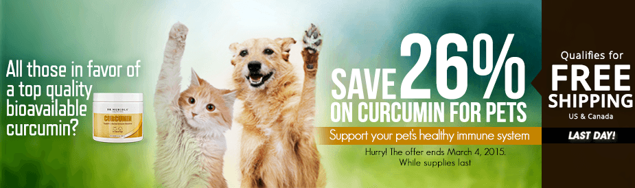 Curcumin for Pets Special Offer
