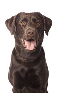 Curcumin for Pets   High-Quality Antioxidant for Dogs & Cats