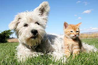 non-toxic repellent pet products