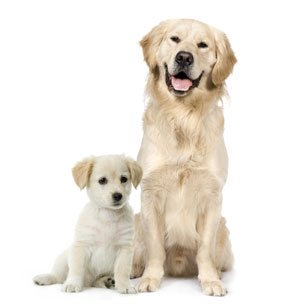 Puppies Benefit From CPA