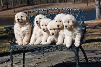 Probiotics for Puppies