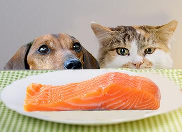 perros y gatos pueden comer salmon