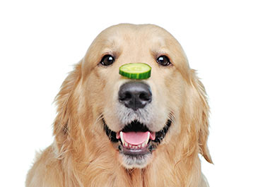 Dog with cucumbers