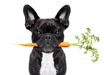 perros comen zanahoria