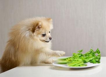 Dog with Celery