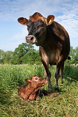 newborn-and-mother