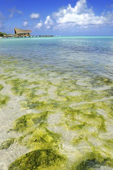 Avoid Tropical Algae