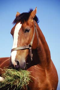 Astaxanthin Benefits to Horses