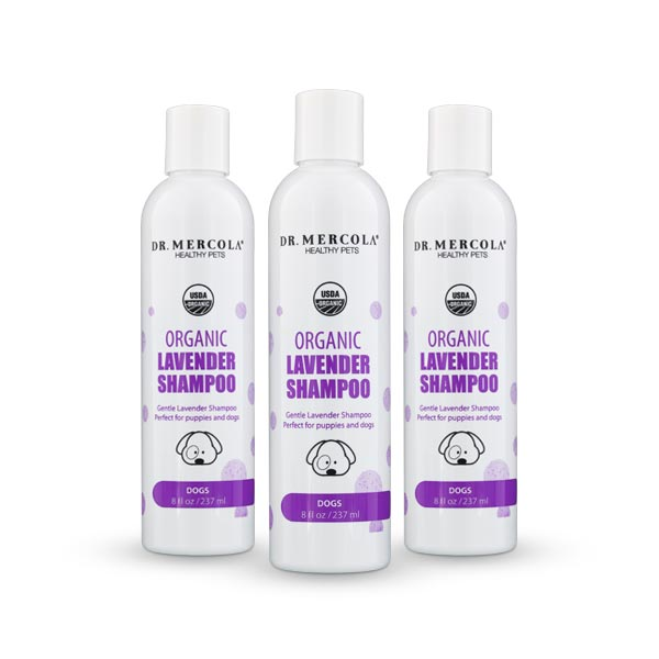 Organic Lavender Shampoo for Dogs 3-Pack
