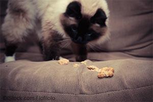 구토하는 고양이