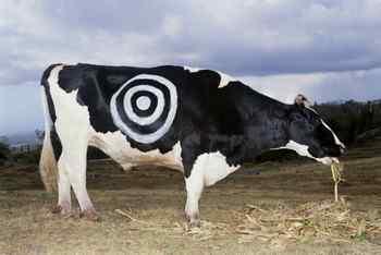 raw milk, cow