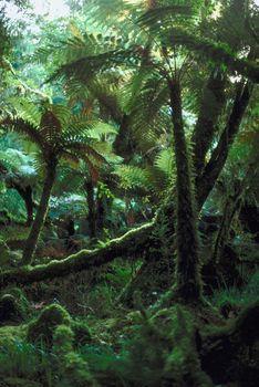 rainforest, plants, medicinal