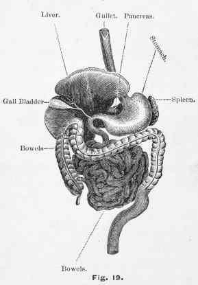 appendix, appendicitis, appendectomy, surgery, bacteria, probiotics