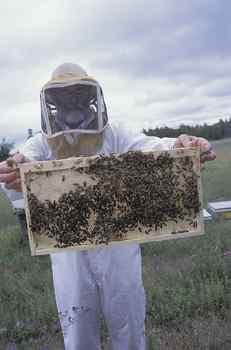 beekeepers, honeybees, bees