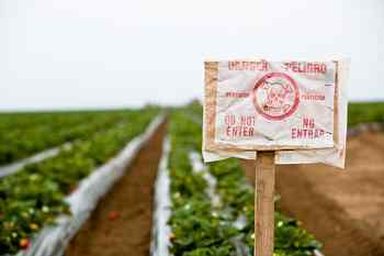organic, farm, big business