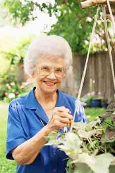 elderly, Alzheimer's disease