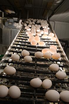 protein, toxin, toxic, food, melamine, contamination, china