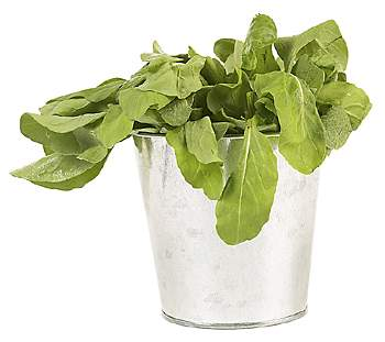 spinach, lettuce