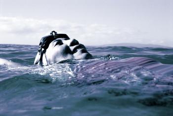 swim, swimming