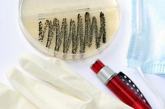 tea tree oil, MRSA, methicillin-resistant Staphylococcus aureus, antibiotic resistant, drug resistant, infections