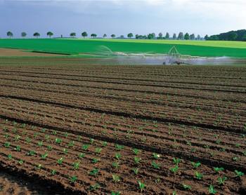 organic farm, sustainable