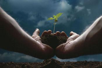 seeds, seedling