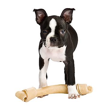 dog, chew bone, pet