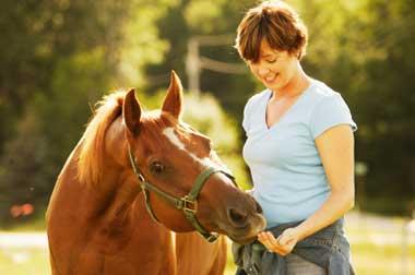 horse, diet