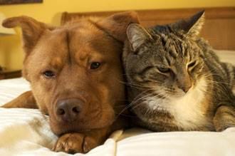 causes of pet diabetes