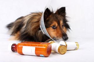 dog antibiotic resistance
