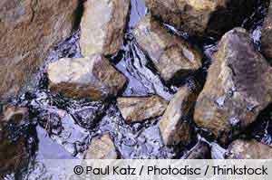 Environmental effects of an Oil Spill
