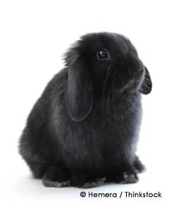 Pet bunny rabbit