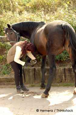 Pet Horse and owner