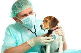 dog, heart disease