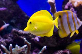 can fish talk fish swim bladder make noise not talk