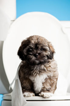 puppy with diarrhea